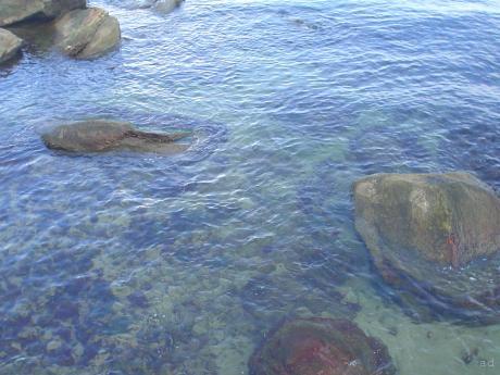 um cheiro de amor espalhado no ar a me enlouquecer, quisera viesse do mar e nao de vc